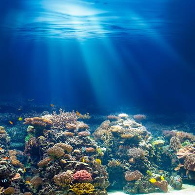 神秘的な海は夏に発見