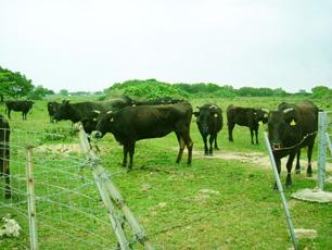 よい食肉は牧場から